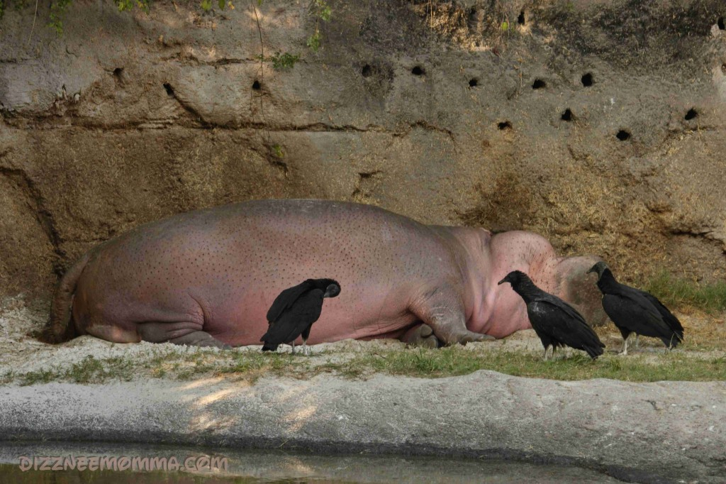 Heap o' Hippo